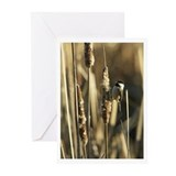 Chickadee - Greeting Cards (Pk of 10)