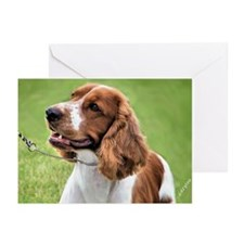 Welsh Springer Spaniel Greeting Cards (Package of