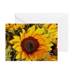 Tuscany Sunflower - Greeting Cards (Pk of 10)