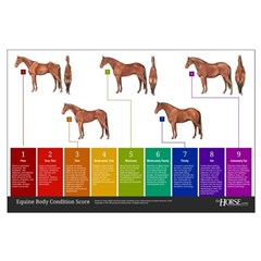 Horse Body Condition Score Posters
