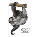 Linnaeus's Two-Toed Sloth Postcards (Package of 8)
