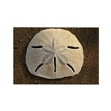 Sand Dollar (Color) Rectangle Magnet