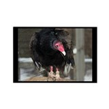 Turkey Vulture Rectangle Magnet