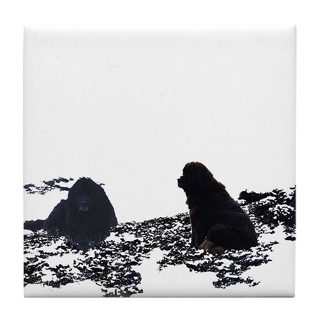 Newfy Cove Tile Coaster