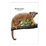 Kinkajou Postcards (Package of 8)
