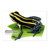 Amazonian Poison Frog Postcards (Package of 8)
