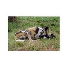 wild dog Rectangle Magnet