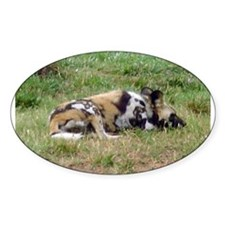 wild dog Oval Decal
