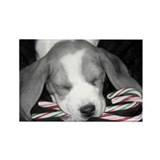 Sweet Dreams Beagle Rectangle Magnet