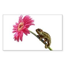 Chameleon Lizard on pink flower Decal