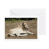"""Fjord Foal 1"" Greeting Cards (Pk of 10)"