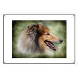 Beautiful Collie Profile Banner