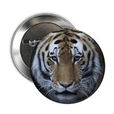 "Tiger Portrait 2.25"" Button (10 pack)"