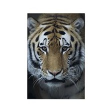 Tiger Portrait Rectangle Magnet (10 pack)