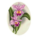 Orchid Antique Botanical Prin Oval Ornament