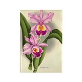 Orchid Antique Botanical Prin Rectangle Magnet