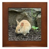 Baby Rabbit by the Rocks Framed Tile