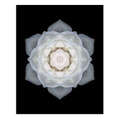 White Rose Mandala Poster (16x20)