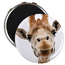 "Hangover Movie Part 3 Giraffe 2.25"" Magnet (100 pa"