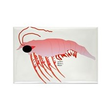 Pink Krill Rectangle Magnet