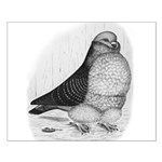 Chinese Owl Pigeon Small Poster