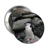 Chinstrap Penguin Button