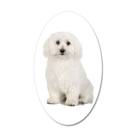 The Perfect Bichon Frise 20x12 Oval Wall Decal