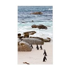 Black-footed African Penguins  Decal