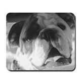 Bulldog in B&W Mousepad