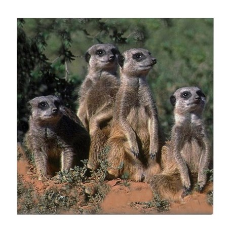 MEERKAT FAMILY PORTRAIT Tile Coaster