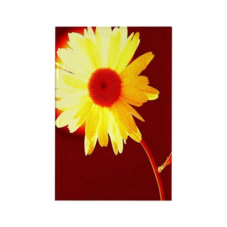 Hot Daisy Rectangle Magnet
