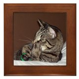 Tabby Cat II Framed Tile