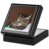 Tabby Cat III Keepsake Box