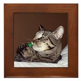 Tabby Cat IV Framed Tile