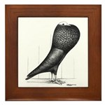 Silesian Pouter Pigeon Framed Tile