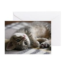 Lying kitten Greeting Cards (Pk of 20)