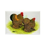 GL Cochin Bantams Rectangle Magnet (100 pack)