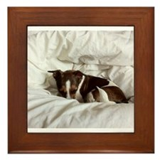 Sleepy Jack Russel Brindle Framed Tile