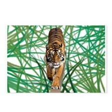 Tiger in the jungle Postcards (Package of 8)