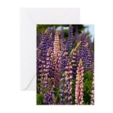 Lupine Greeting Cards (Pk of 10)