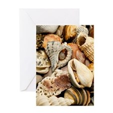 Unique Seashell Greeting Card