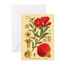 Vintage Pomegranate Greeting Cards (Pk of 20)