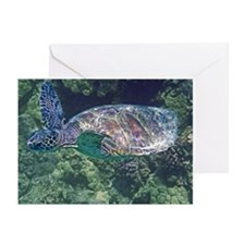 """Honu Flight"" Greeting Cards (Pk of 10)"