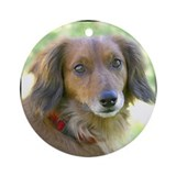 Long Hair Dachshund dog  Ornament (Round)