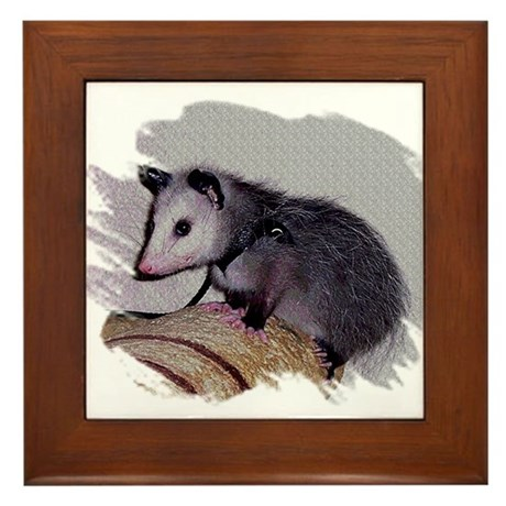 Baby Possum Framed Tile