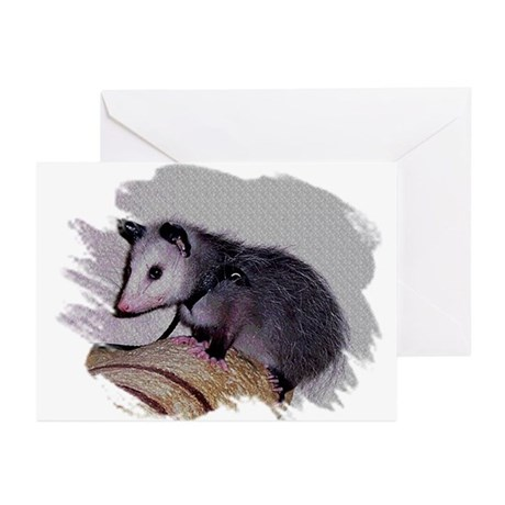 Baby Possum Greeting Cards (Pk of 10)