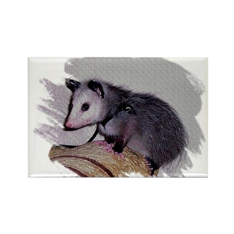 Baby Possum Rectangle Magnet