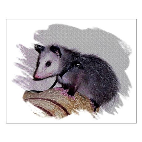 Baby Possum Small Poster