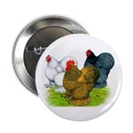Assorted Cochins Button