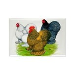 Assorted Cochins Rectangle Magnet (100 pack)